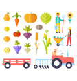 harvest person and vegetables vector image vector image