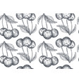 seamless pattern with hand drawn cherry vector image