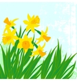 card with daffodils on textured background vector image
