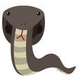 cobra snake in gray color vector image