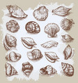 seashells big set hand drawn vintage sketch vector image vector image