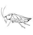 cockroach drawing on white background vector image vector image