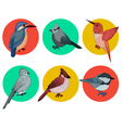 Colorful Birds Different Birds Set of Birds vector image