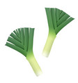 onion leek ripe green vector image
