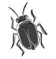 black bug on white background vector image vector image