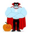 Dracula and pumpkin Serious Powerful vampire vector image vector image