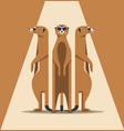 family of meerkats is basking in the sun