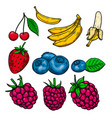 set fruits and berries in engraving style vector image