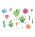 collection beautiful garden flowers and leaves vector image