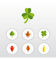 flat icon maple set of alder maple frond and vector image vector image