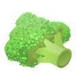 fresh broccoli icon isometric style vector image vector image