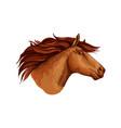 horse racer mustang head sketch symbol vector image vector image