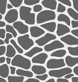 leather of giraffe vector image