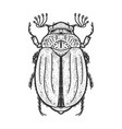 chafer may bug melolontha sketch vector image