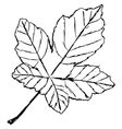 yellow leaf vector image vector image