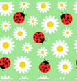 daisies and ladybugs seamless pattern vector image