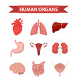 internal organs of the human icons set flat style vector image vector image