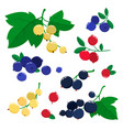 set cartoon cranberries and blueberries vector image vector image