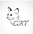 A cat head on white background pet animal easy