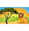 a lion standing on raod vector image vector image