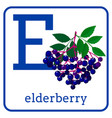 an alphabet with cute fruits letter e elderberry vector image vector image