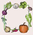 background with hand drawn vegetables vector image