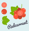 bunch of redcurrant vector image
