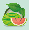 watermelon and leaves natural vector image vector image