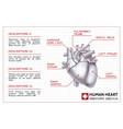 medical organ infographics vector image