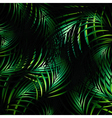 Jungle Night Background vector image