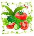 Still life of tomatoes and cucumbers vector image vector image