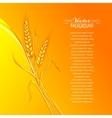 Ears of wheat on orange background vector image