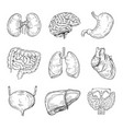 human inner organs hand drawn brain heart vector image