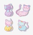 set cute cats domestic animals vector image vector image