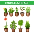 Houseplants Realistic Icons Set vector image