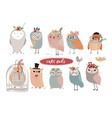 set with cute owls vector image vector image