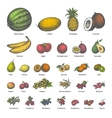 big set different colored juicy ripe fruit vector image vector image