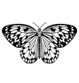butterfly monochrome drawing in black and white vector image vector image