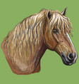 colorful hand drawing horse portrait-2 vector image