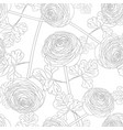ranunculus flower on white background vector image vector image