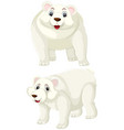 set of polar bear character vector image