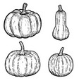 set pumpkin isolated on white background vector image
