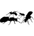 silhouettes of different ants vector image vector image