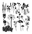 collection silhouette of wild flowers herbs and vector image