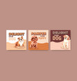 advertise template with dogs and food design vector image vector image