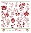 Big set of Flowers vector image