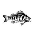 largemouth bass vintage concept vector image