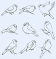 little tits sparrows and bullfinches vector image vector image