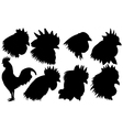 roosters vector image