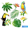 set of tropical flowers leaves and birds vector image